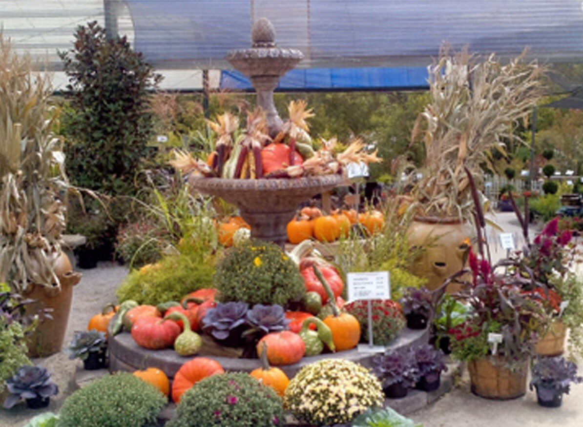 Garden Centers in Knoxville TN - What Sets Willow Ridge Apart?