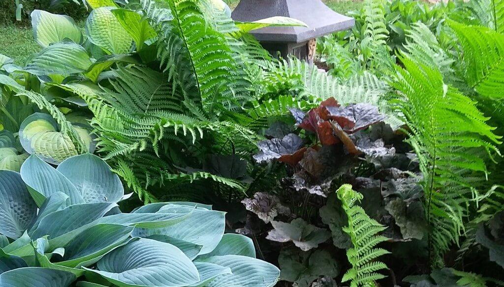 Sociedad de Horticultura del Pacífico | El Nuevo Jardín de la Sombra