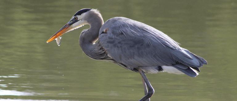 Protect Pond Fish