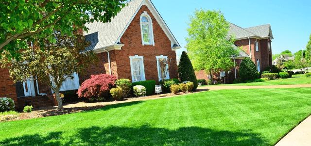Best Lawn Care Advice