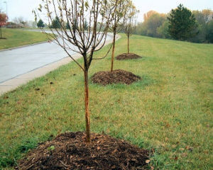How To Protect Young Trees In Winter Willow Ridge