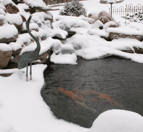 Winter pond fish care willow ridge knoxville oak ridge for Koi pond temperature winter