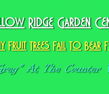 fail to bear fruit