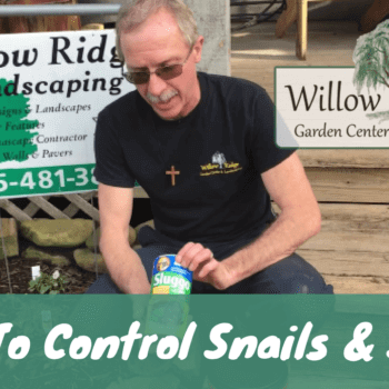 how to control snails and slugs