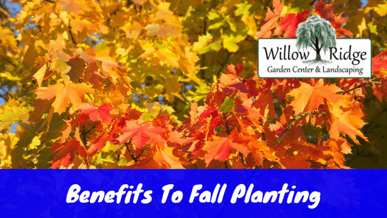 benefits to fall planting