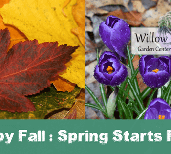 happy fall spring starts now