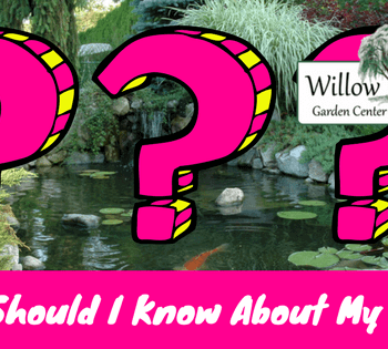 What should i know about my pond