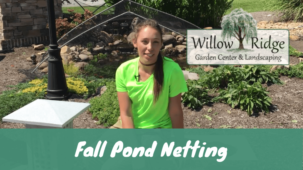 Fall pond netting willow ridge knoxville oak ridge for Garden pool netting