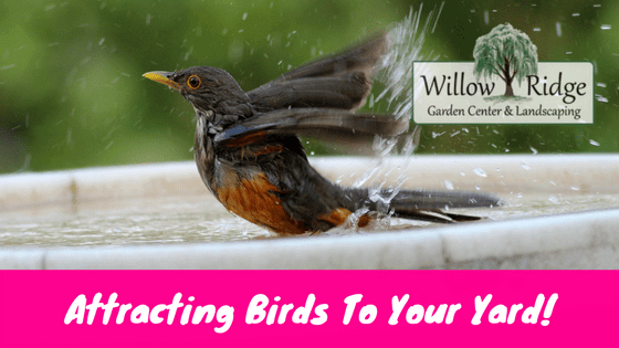Suggestions For Attracting Birds To Your Yard - Willow ...