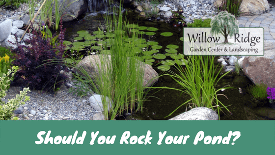 rock your pond