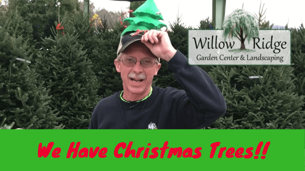 We Have Christmas Trees - Willow Ridge