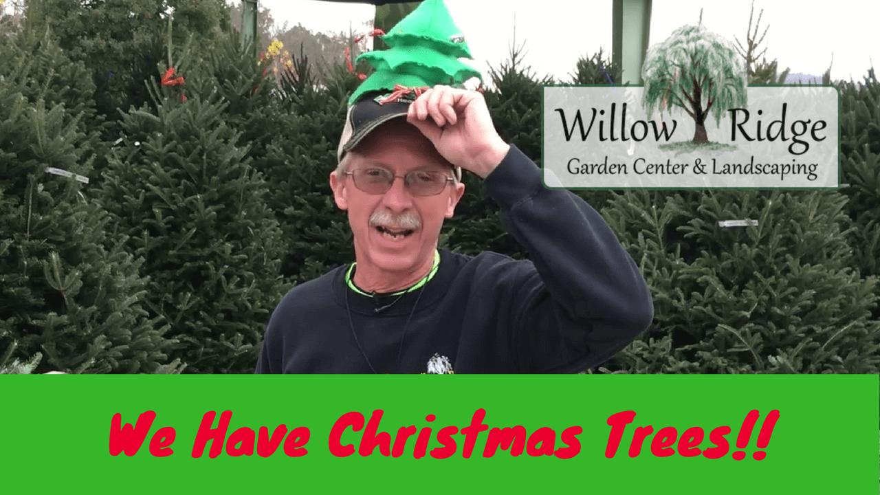 Christmas Trees Garden Ridge
