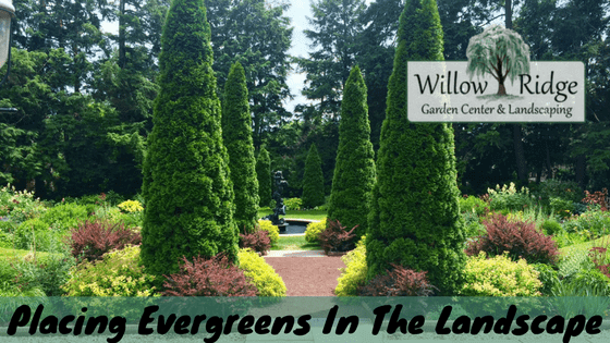 Guidelines For Placing Evergreens In The Landscape