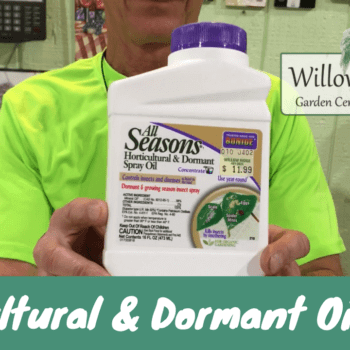 dormant oil spray