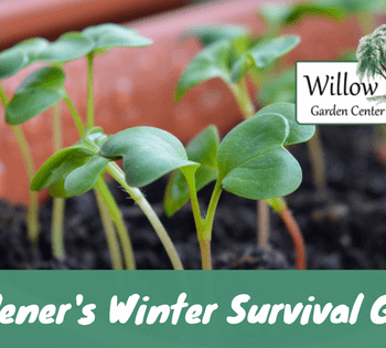 gardener's winter survival guide
