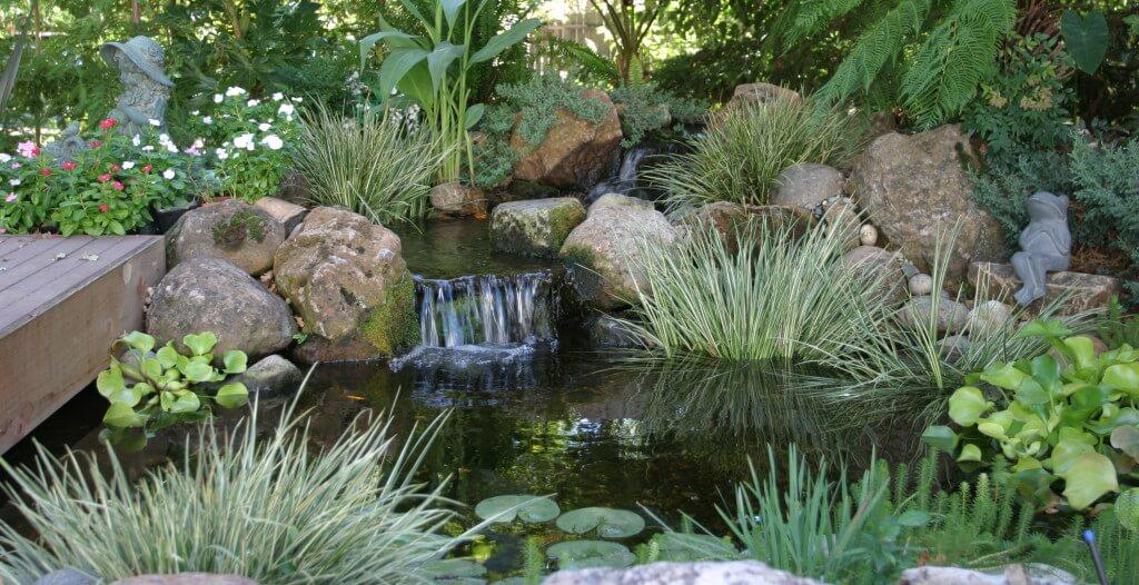 Marginal Water Plant