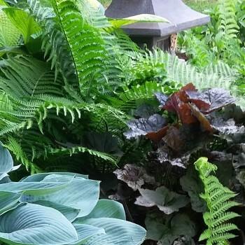 Shade Garden Perennials