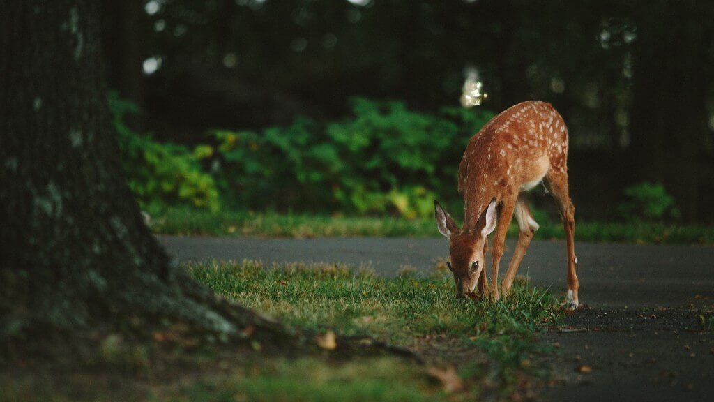 Minimizing Deer Damage