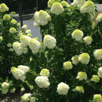 Blooming Heat Tolerant Plants