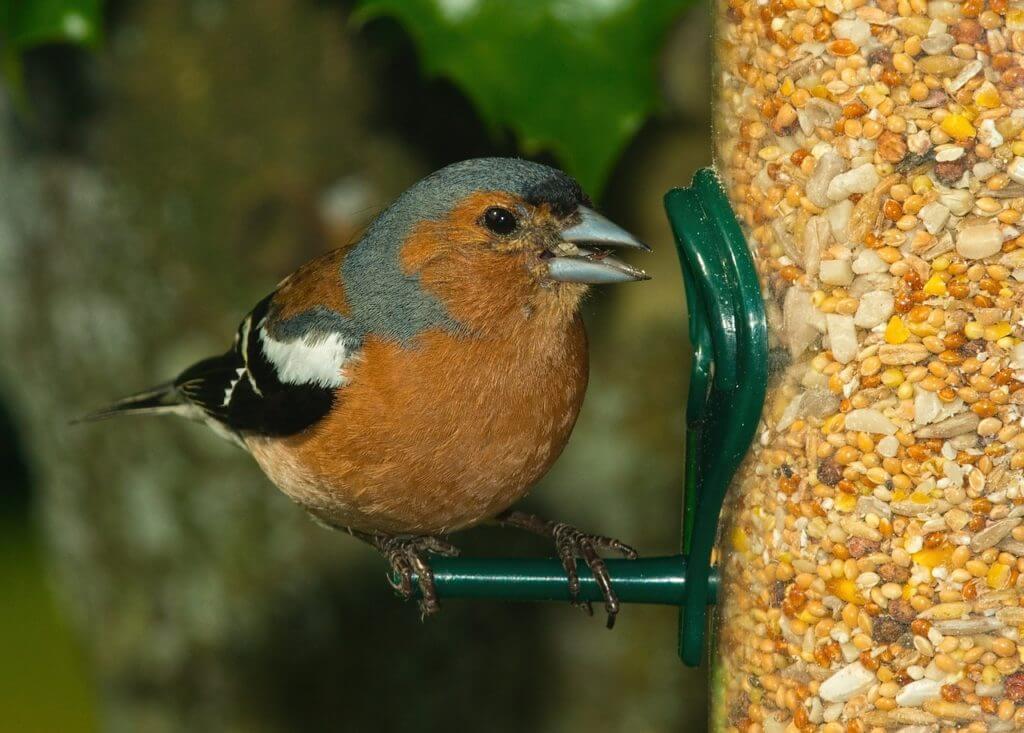 Feeding Birds During Summer