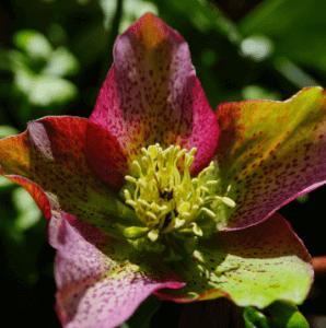 Got Winter Blooms?