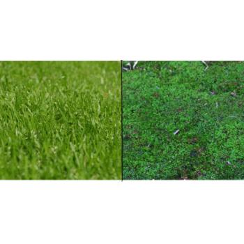 Lawn Moss Control