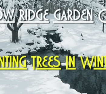 Planting Trees and Shrubs During Winter