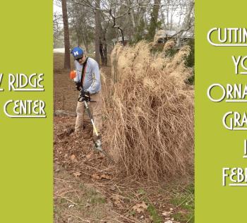 Trim Ornamental Grasses