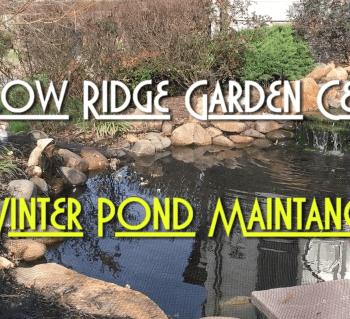 Winter Pond Maintenance
