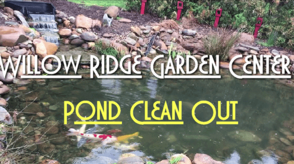spring pond clean out
