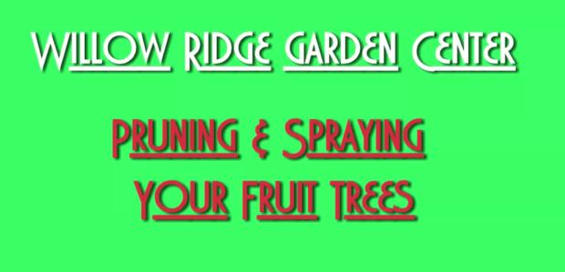 pruning and spraying fruit trees