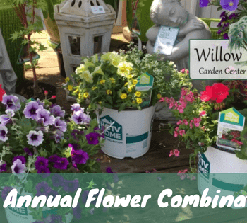 decorative annual flower combinations
