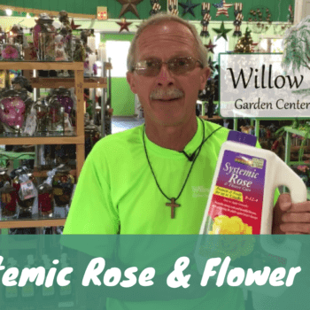 systemic rose and flower care