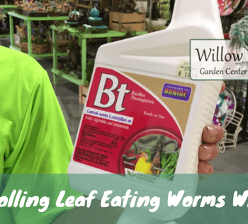 Controlling Leaf Eating Worms