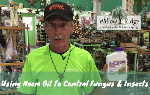 use neem oil to control fungus and insects