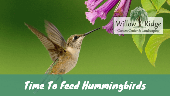 Feed Hummingbirds