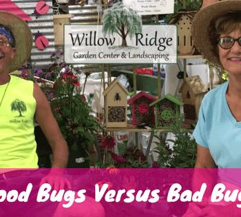 good bugs versus bad bugs
