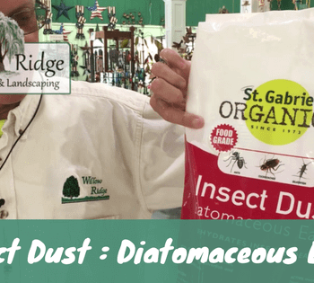 insect dust diatomaceous earth