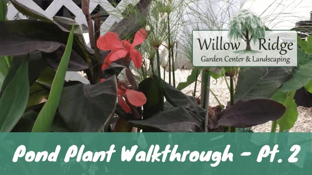water plant walkthrough
