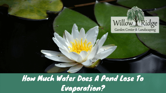 pond lose to evaporation