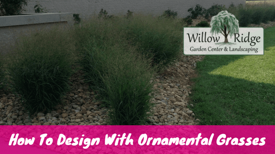 design with ornamental grasses
