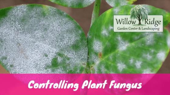 Plant Fungus