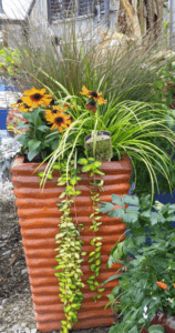 container plantings