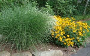 design with ornamental grasses