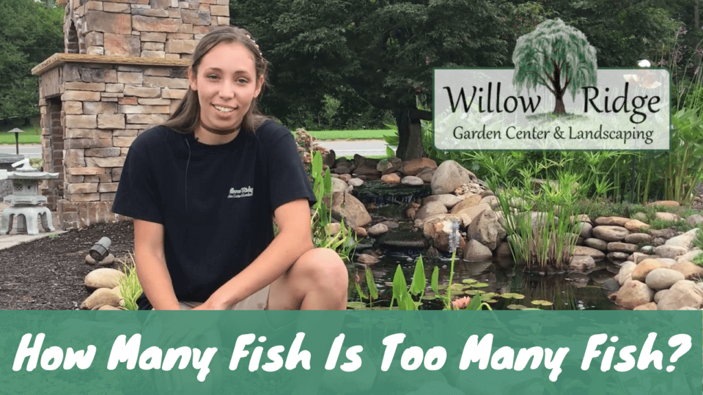 How Many pond Fish
