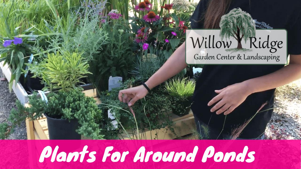 Plants For Around Ponds Willow Ridge Knoxville Oak Ridge