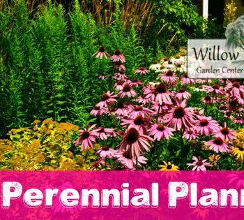 fall perennial planning