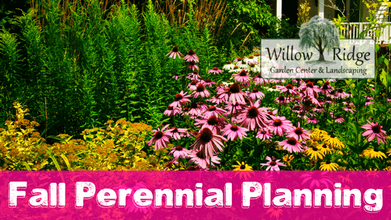 fall perennial planning
