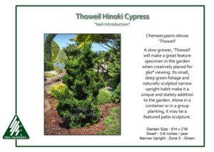 three best conifers