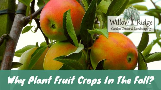 plant fruit crops